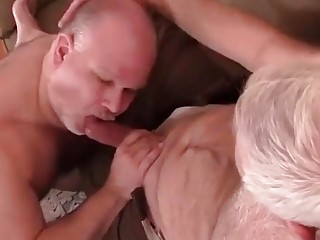 Chubby older guys are sucking cock and fucking